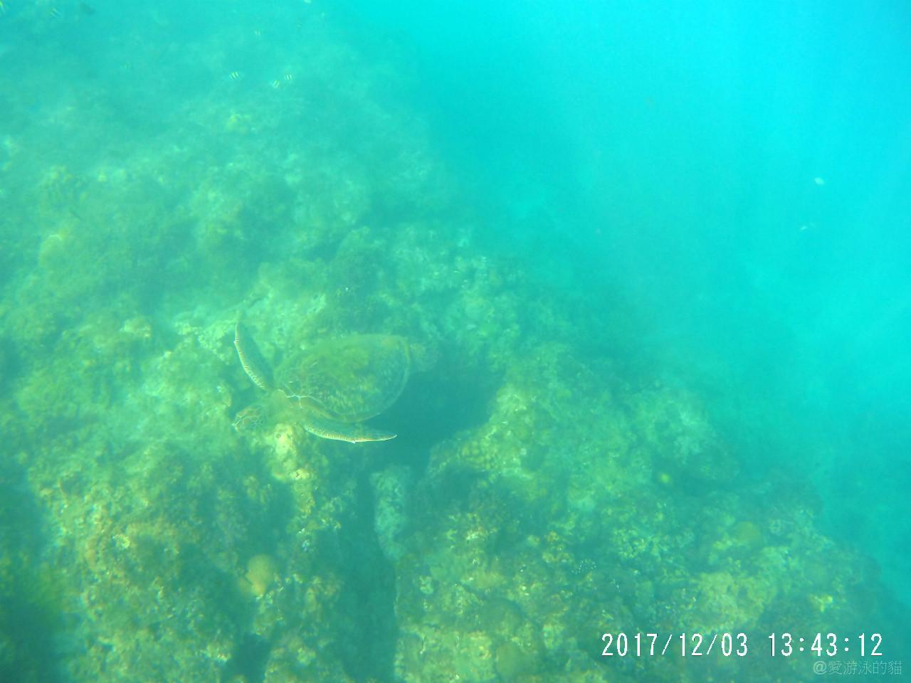 小琉球花瓶岩浮潛-與綠蠵龜同遊